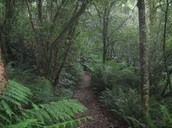 Another Well Cared Rainforest