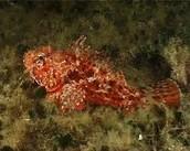 Unique fish