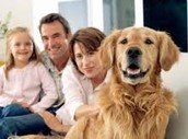 A dogs sense of hearing is more than ten times more accurate than that of a humans.