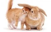 Un conejo y un gato.