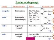 Amino Acid Groups