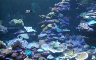 Mar mundo acuario