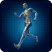 Skeleton in Movement...
