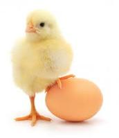 Egg Cam