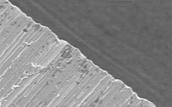 Microscopic edge of shark's tooth