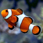 Our shop sells many beautiful, exotic fish !