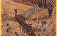 Don't hunt!