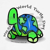 World Turtle Day