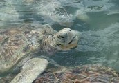 Come to the Cayman Turtle Farm!