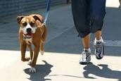 Dog Walker or Dog Groomer