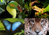 Four Animals That Live in the Rain Forest