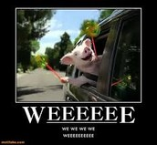 Weeeeeeeeeee
