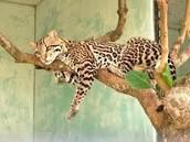 One of Guyana's beautiful animals