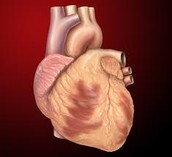 Different types of Heart Diseases