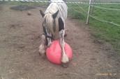 Jolly mega ball paard vanaf 29.50 exl. hoes