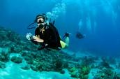 Scuba Diving in Kailua Kuna, Hawaii