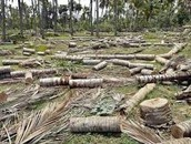 destruction of habitats