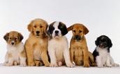 ¡Puedes jugar con cachorros!