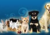 ¡El mejor lugar para consentir y cuidar a tu mascota!
