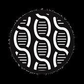 DNA Primers