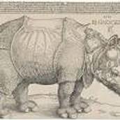 Durer's Rhinocero's