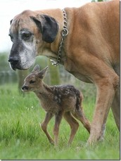 A dog and a young deer