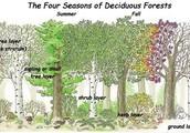 The 5 Zones