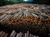 Main Causes of Deforestation