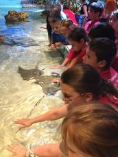 Boston Aquarium Makes Third Grade Field Trip Memories