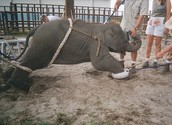 How animals are treated