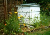 The Beesness - Beekeeping Courses, Honey, Homemade Preserves and other Larder Items