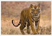 India Wildlife Tours – A Journey to Wild Adventure of India