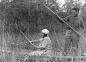 Ojibwe people Harvesting Wild Rice