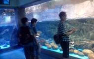 Looking at the fish...