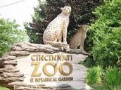 Option 3: Cincinnati Zoo