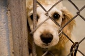 What is Animal Abuse? How are animals affected by it?