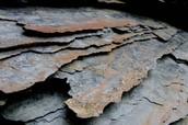 Shale (Sedimentary rock)