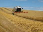 Modern Irish Farming