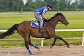 Horse rider in practice