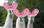 WE ARE THE HOUSE OF LAMAS