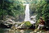 Central American Rainforests