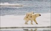 Melting ice... rising seas...