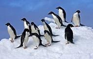 grop of penguins