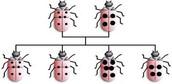 Ladybug Inheritance