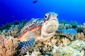 Decreasing and the killing of turtles