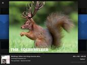 The Squirreleer