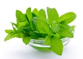 Mint leaves or Mentha