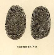 6. Fingerprints