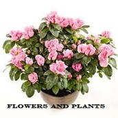 Online Retailers Have Terrific Indoor Hanging Flowers And Plants For Distribution Anywhere