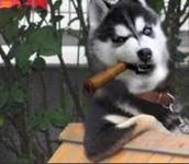 Dog breathing